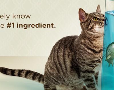 muestra- gratis-comida-gatos-mascotas