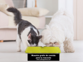 Muestra gratis de comida para tu mascota