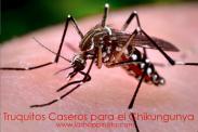 Truquitos Caseros – Chikungunya